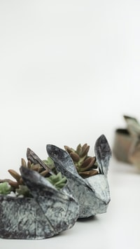 shallow focus photography of green succulent plants