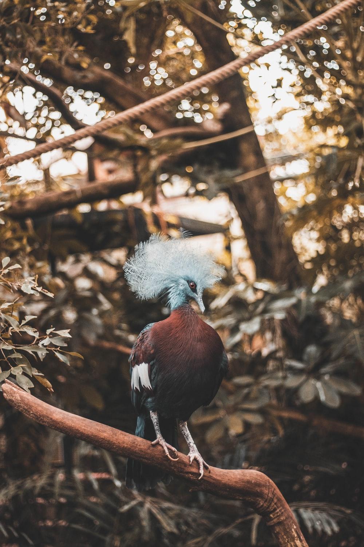 maroon bird standing on tree