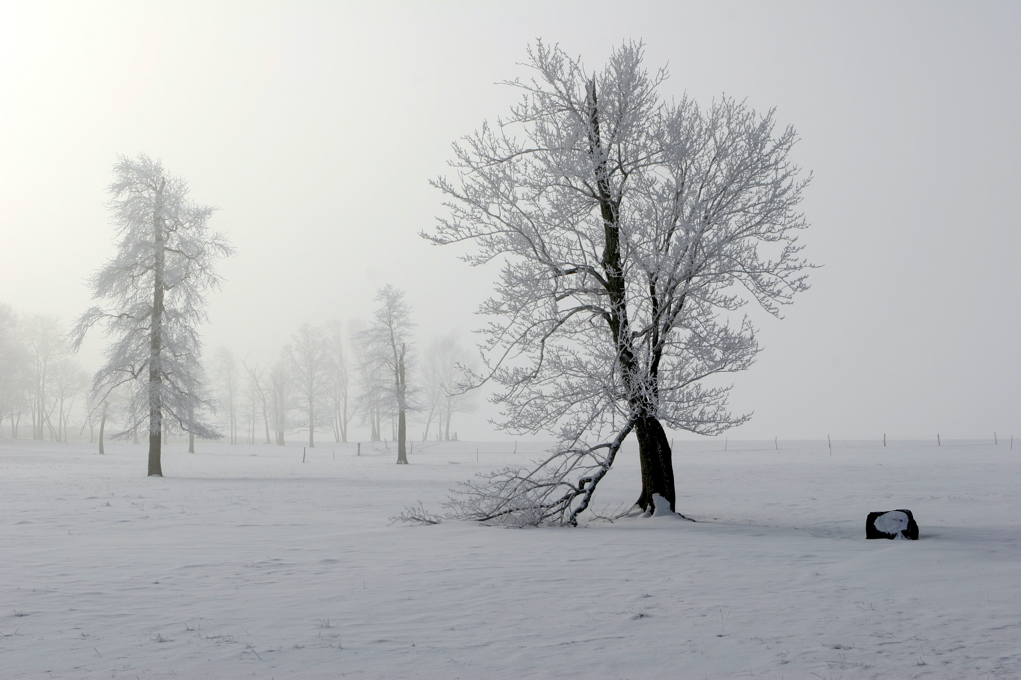 snow cover tree during gray cloudy sky