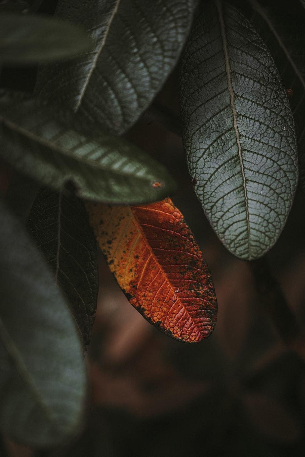 closeup photography of plant