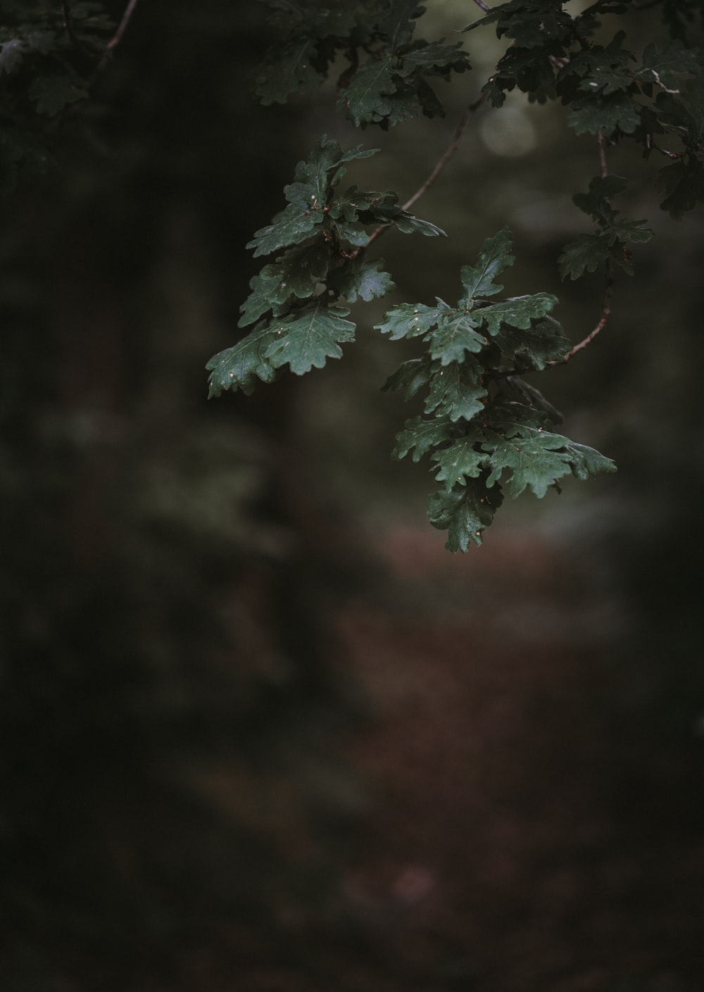 green leafed plant in selective focus photography