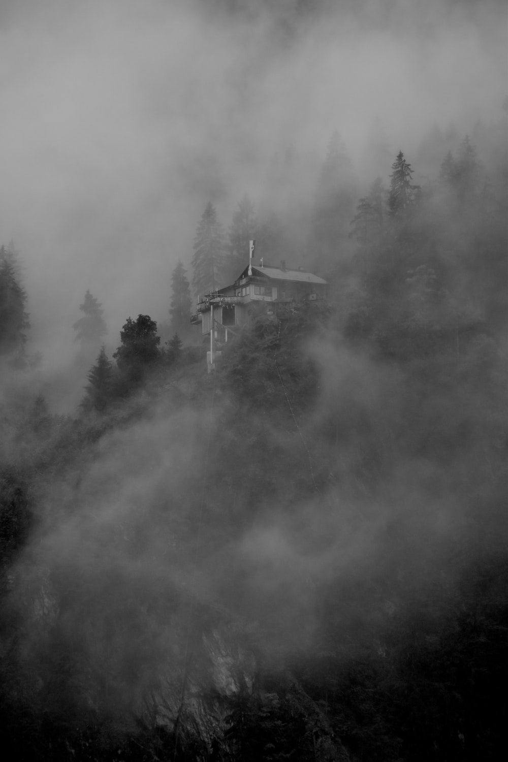 grayscale photography of foggy forest