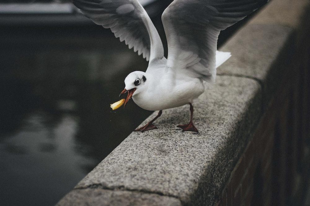 white and black pigeons on top of grey bridge