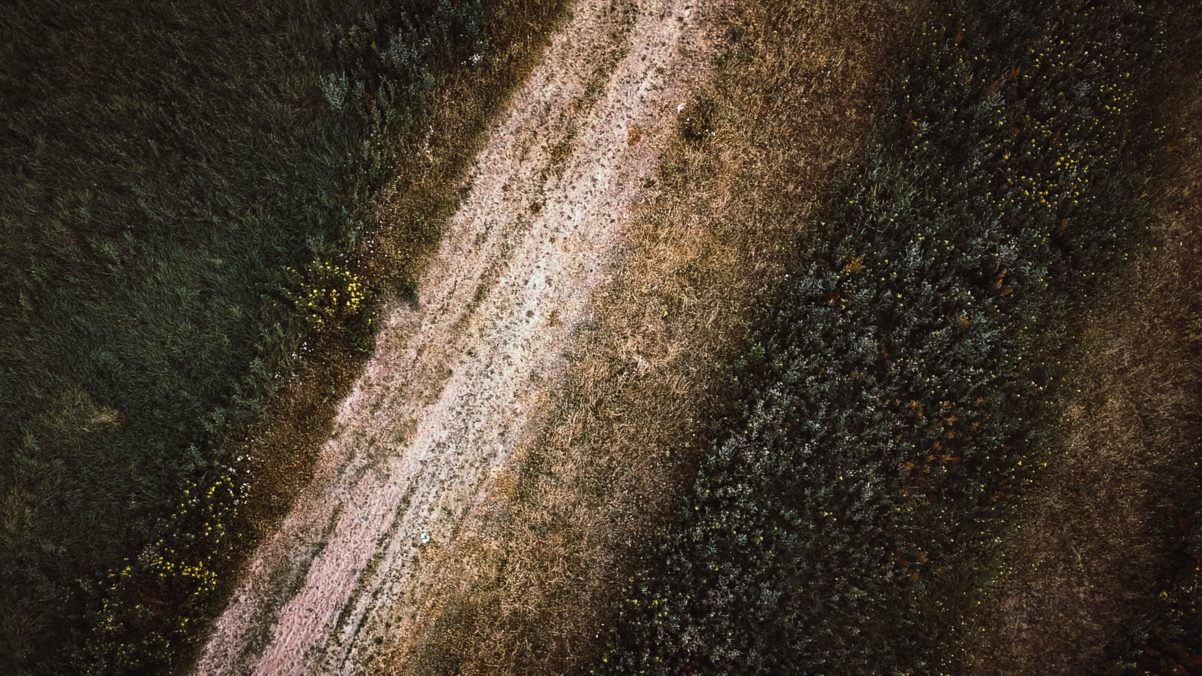 aerial photograph of dirt road between trees