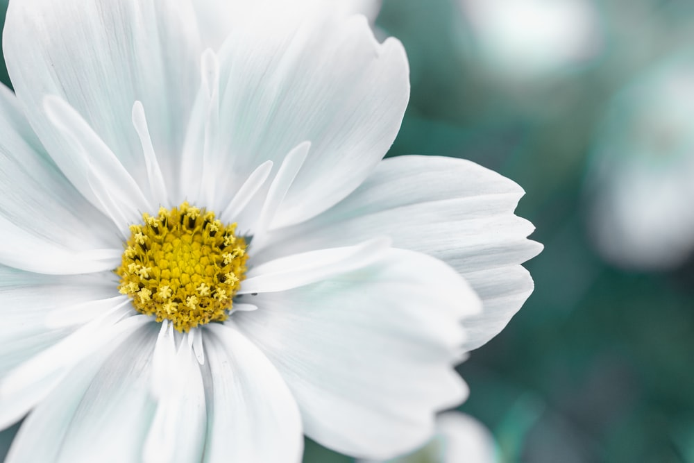 closeup photography of white petaled flower