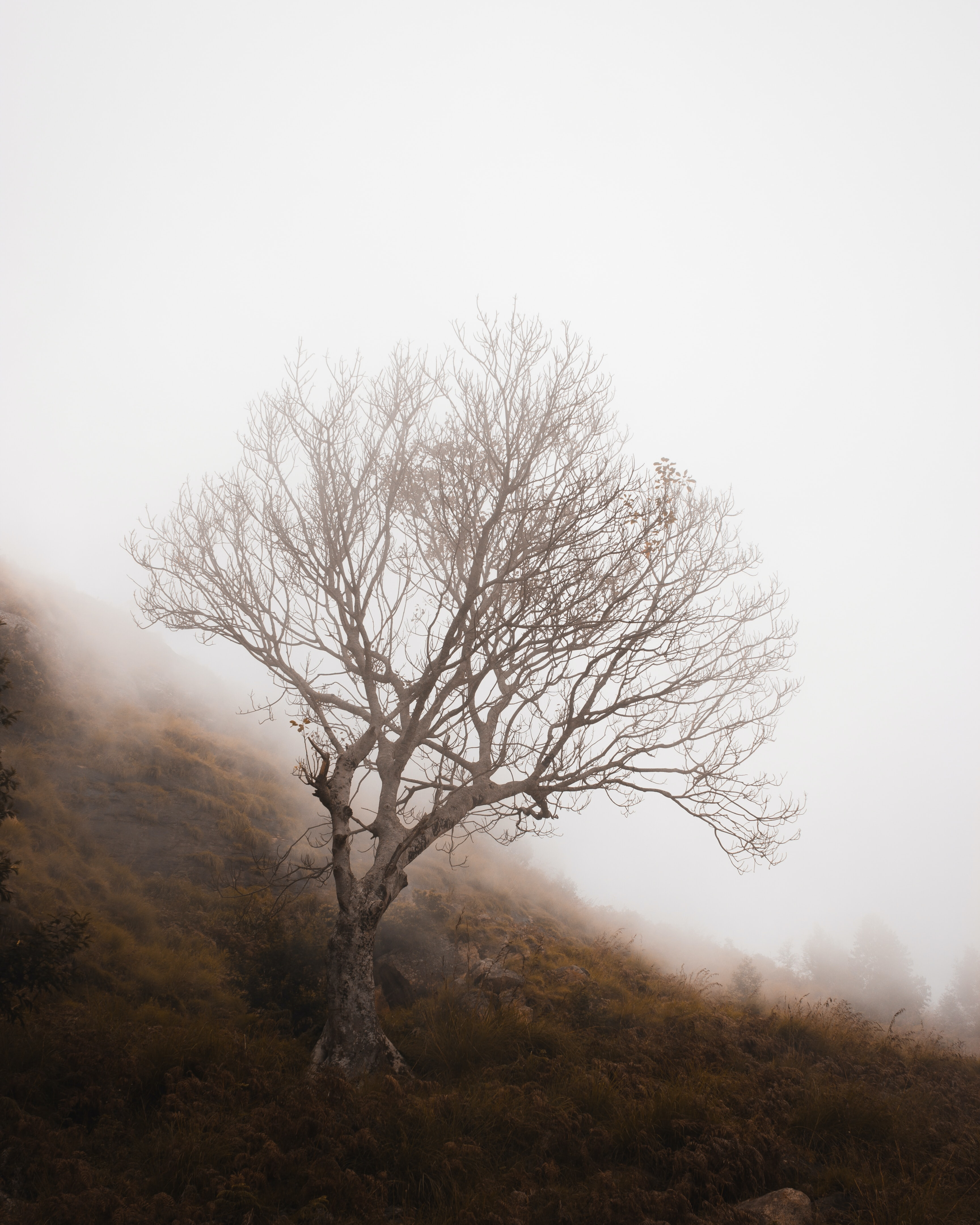 gray tree