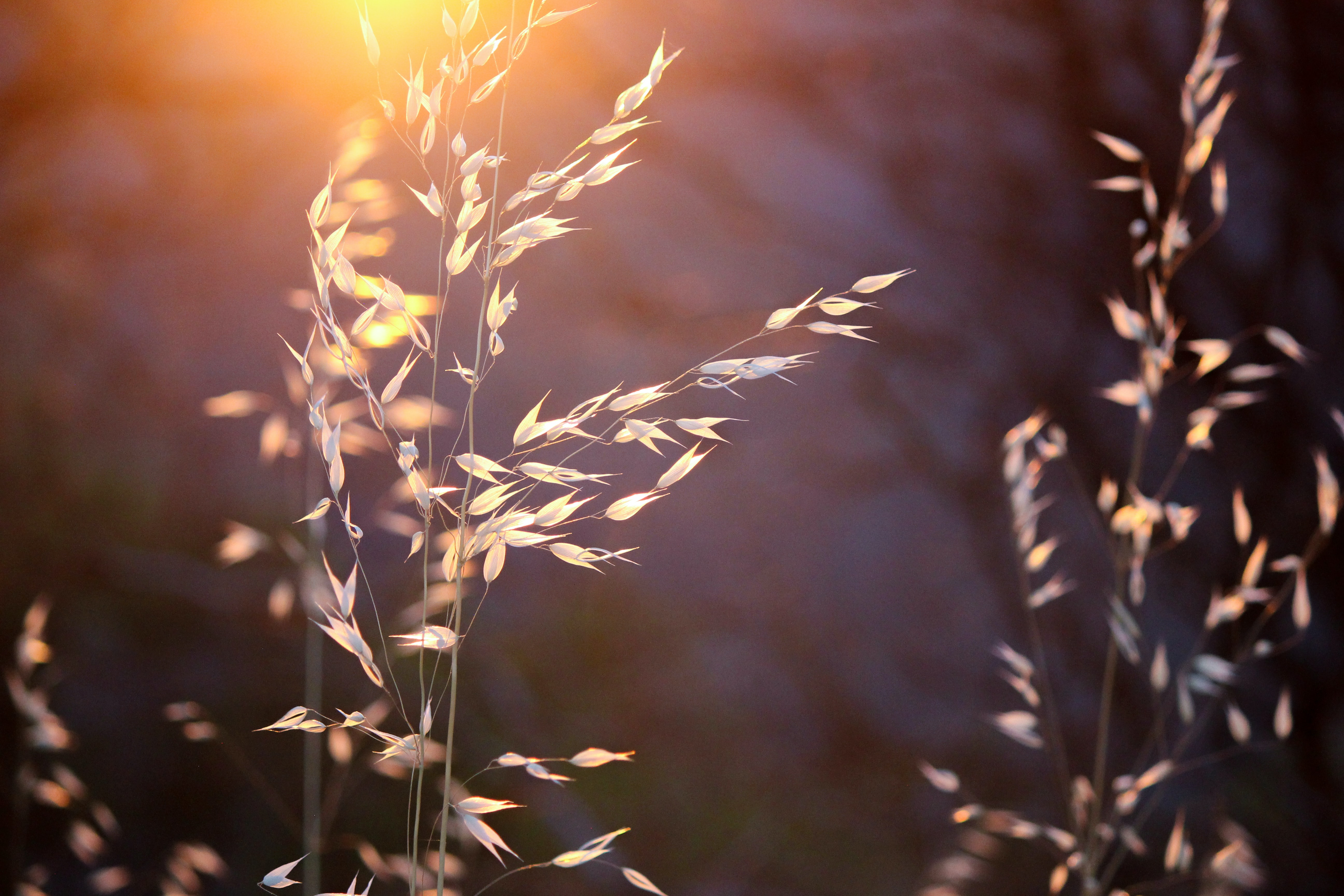 shallow focus photography of wheat plants