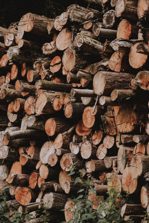 pile of wood log lot