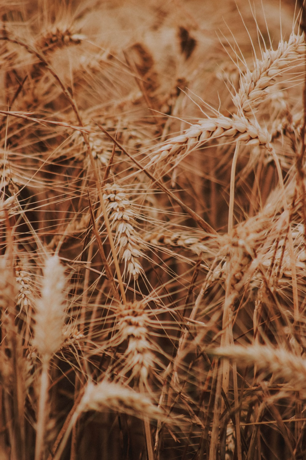 selective focus of rice grains