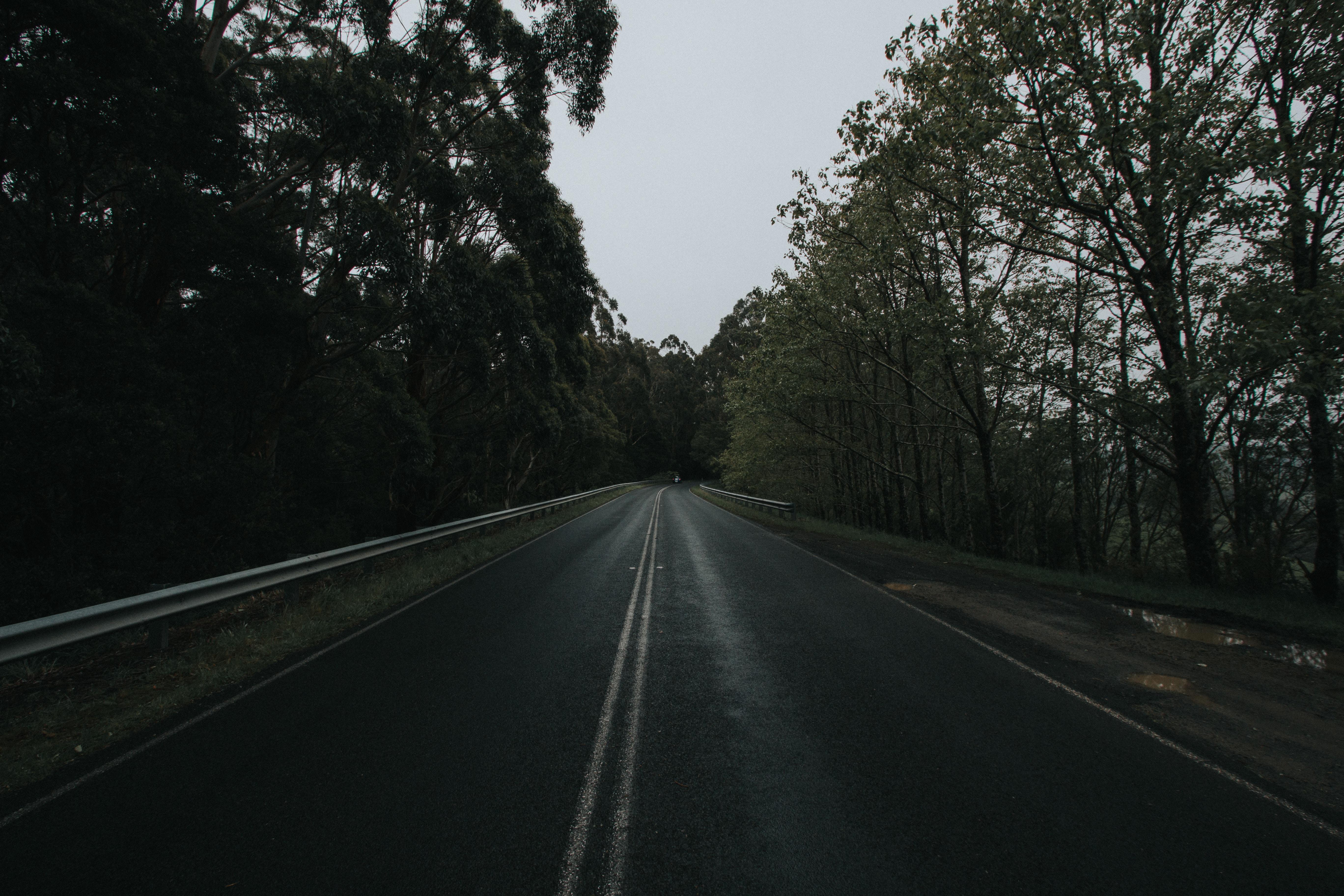 concrete road towards trees
