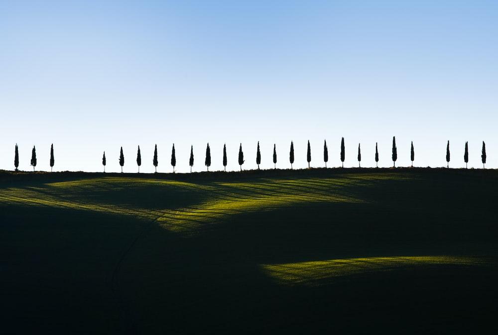 pine trees on green grass