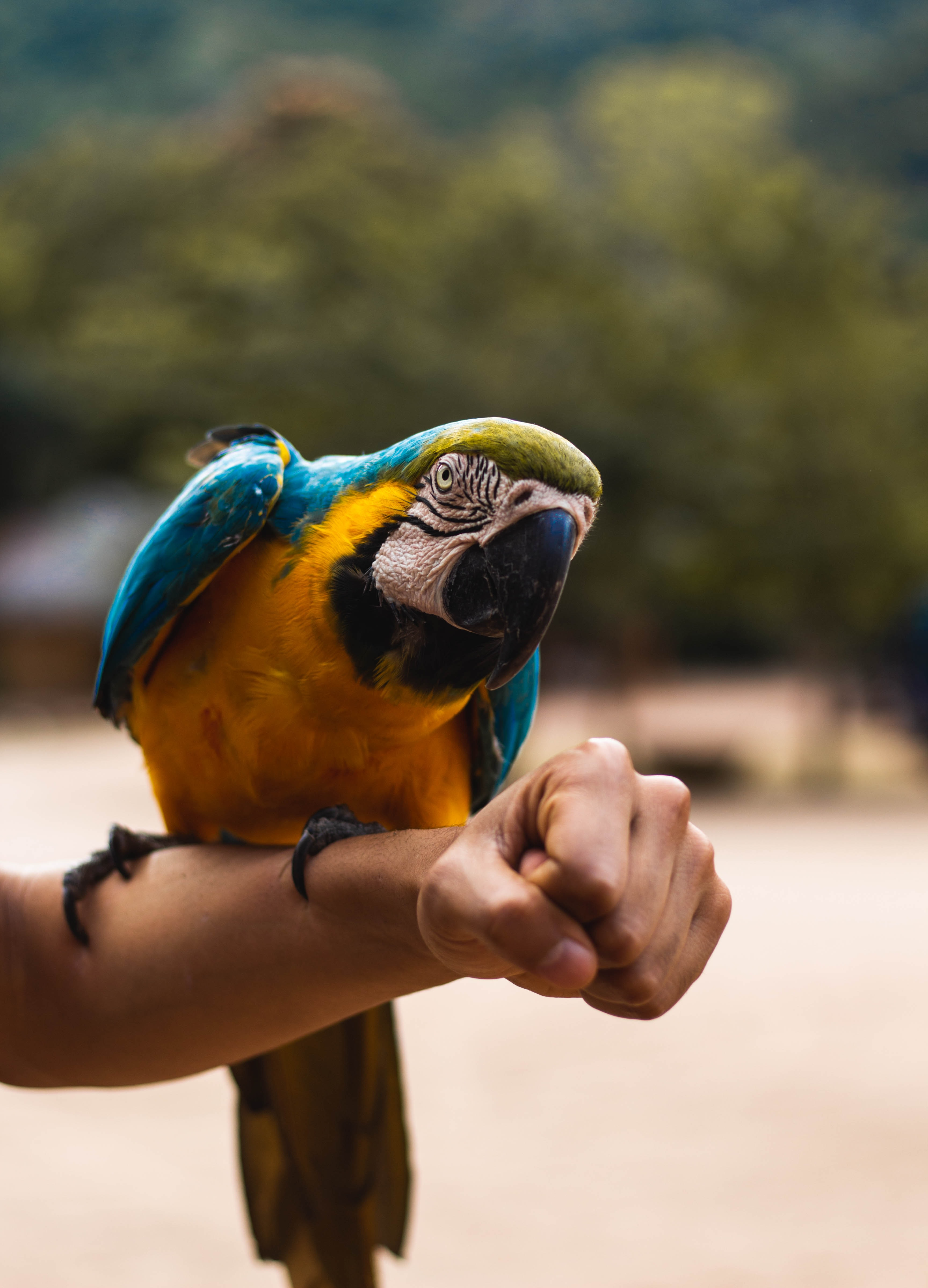 orange, blue, and green macaw bird perched on person's hand