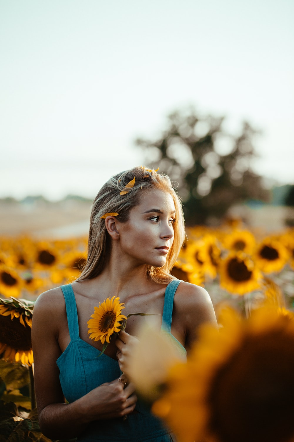 selective focus photo of woman holding sunflower surrounded by sunflowers