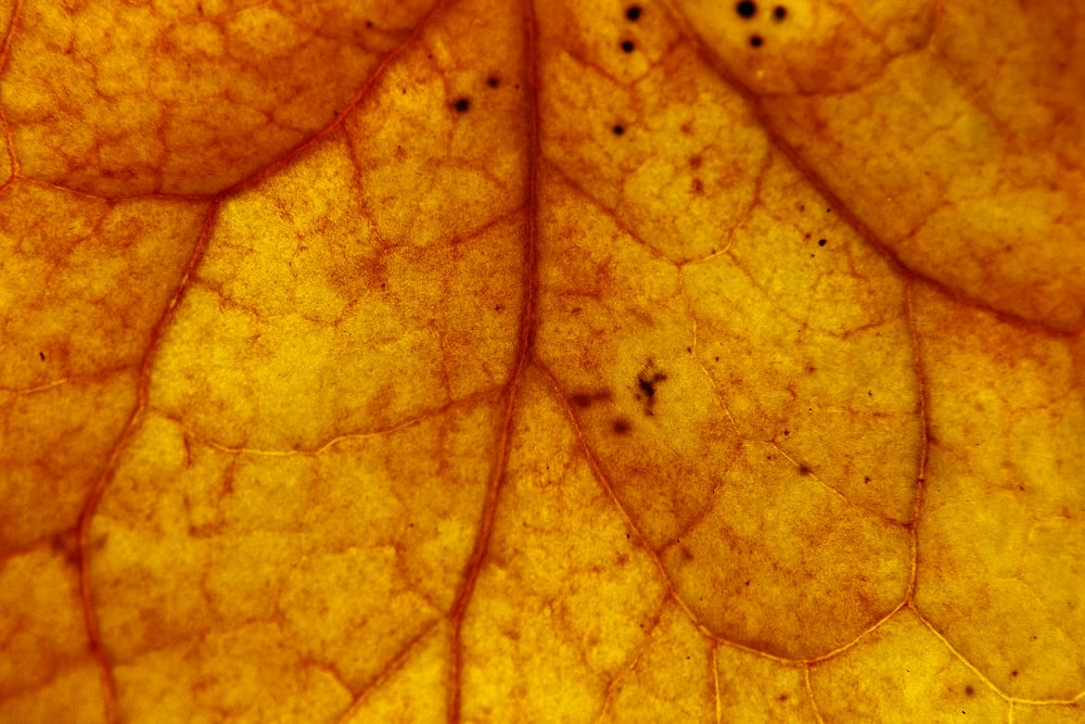 close-up photography of brown leaf