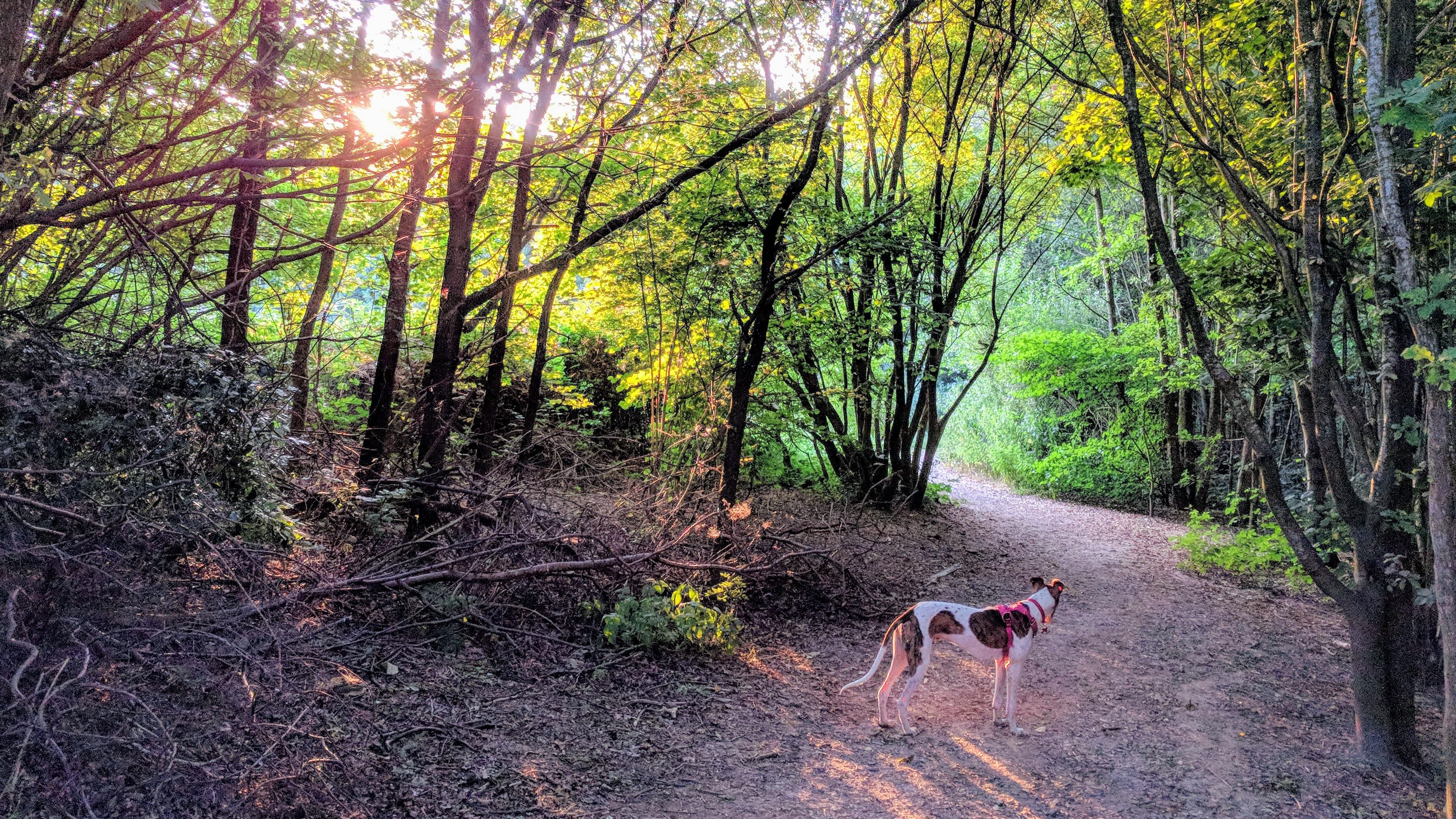 dog on brown road beside trees