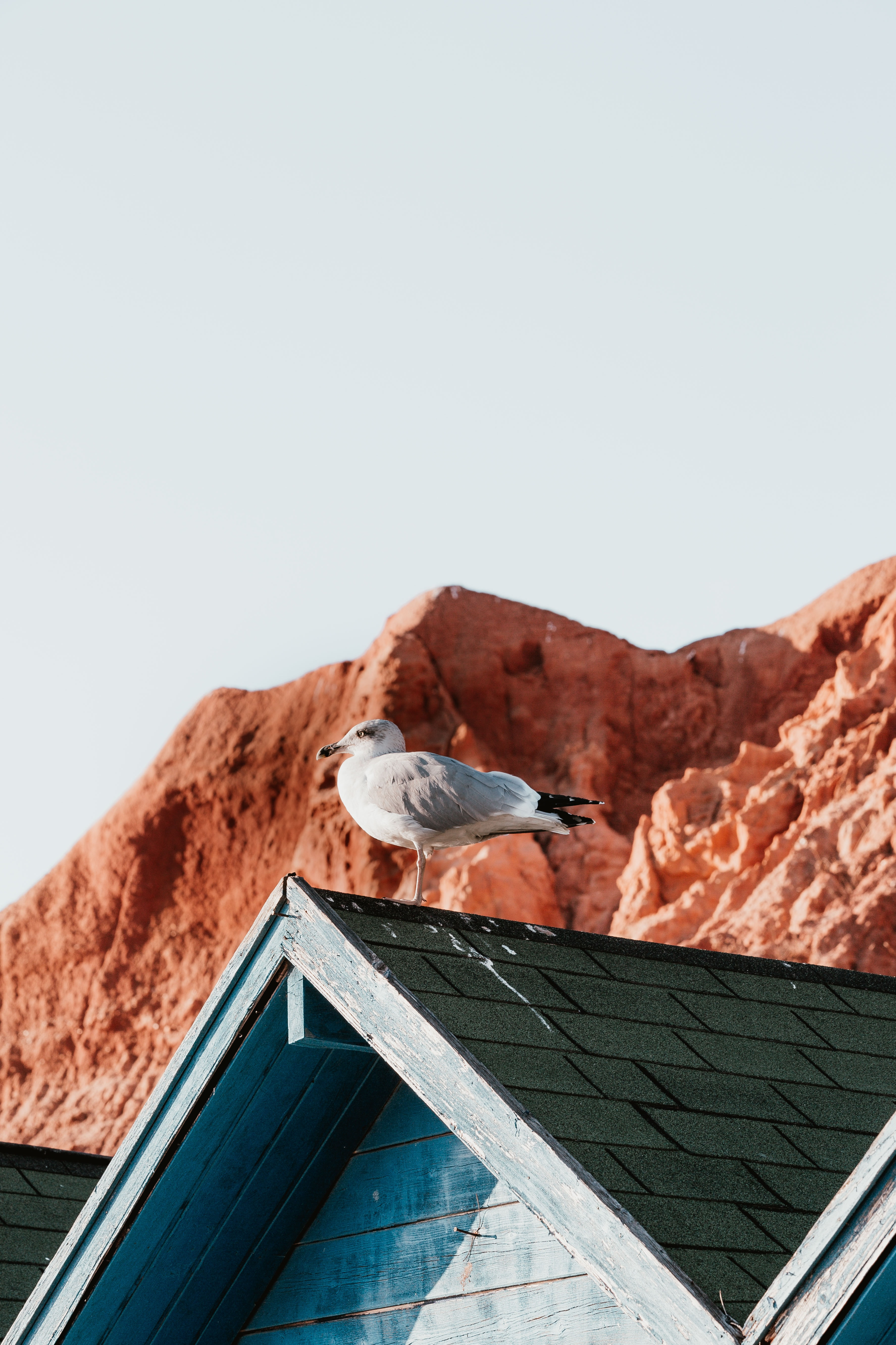 white seagull perching on roof