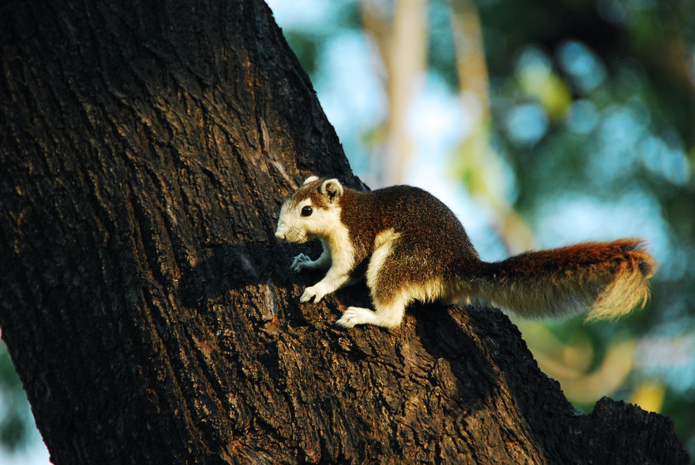 white and brown squirrel on tree