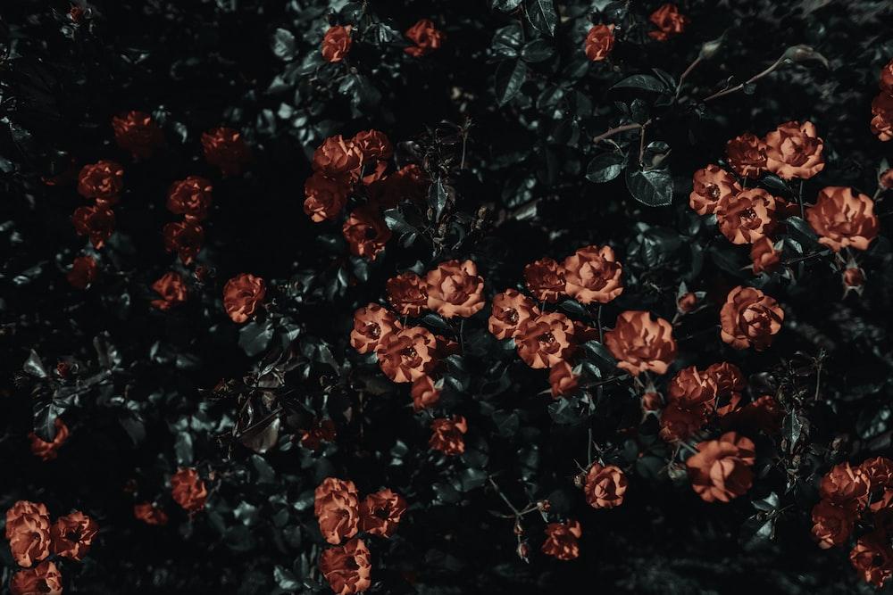 red petal flower