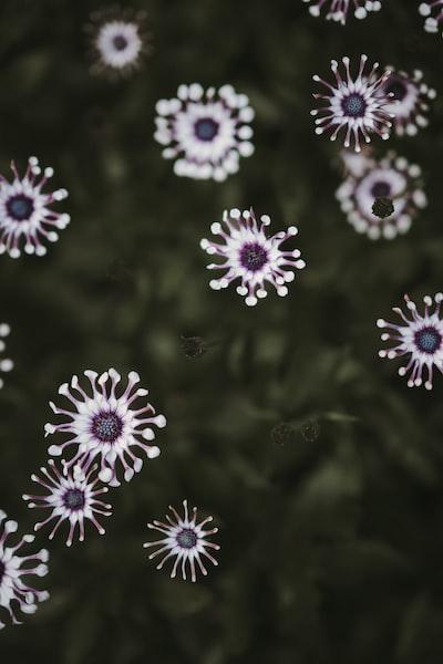 3977. Virágok