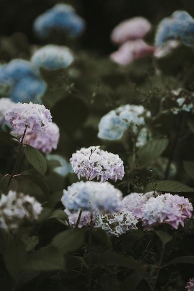 3986. Virágok