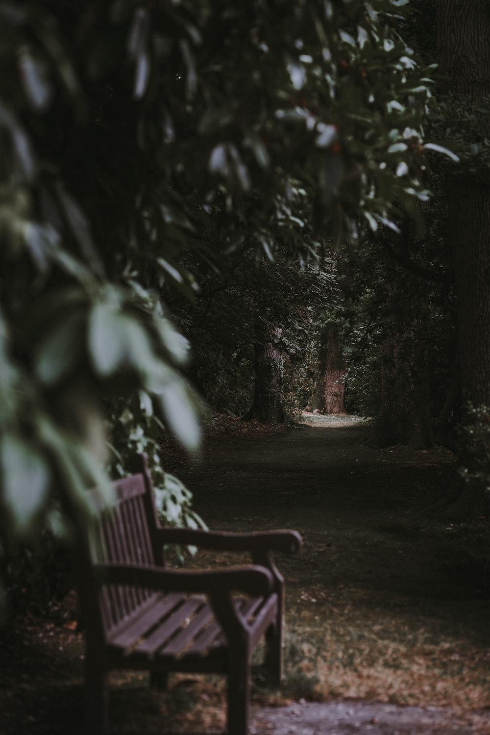 unoccupied brown wooden bench