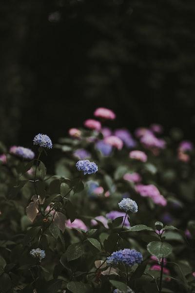 3901. Virágok