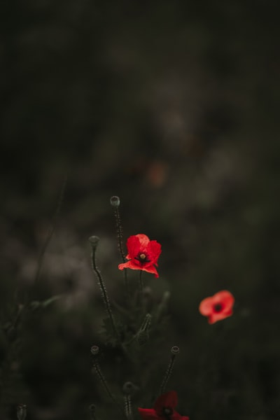 3967. Virágok