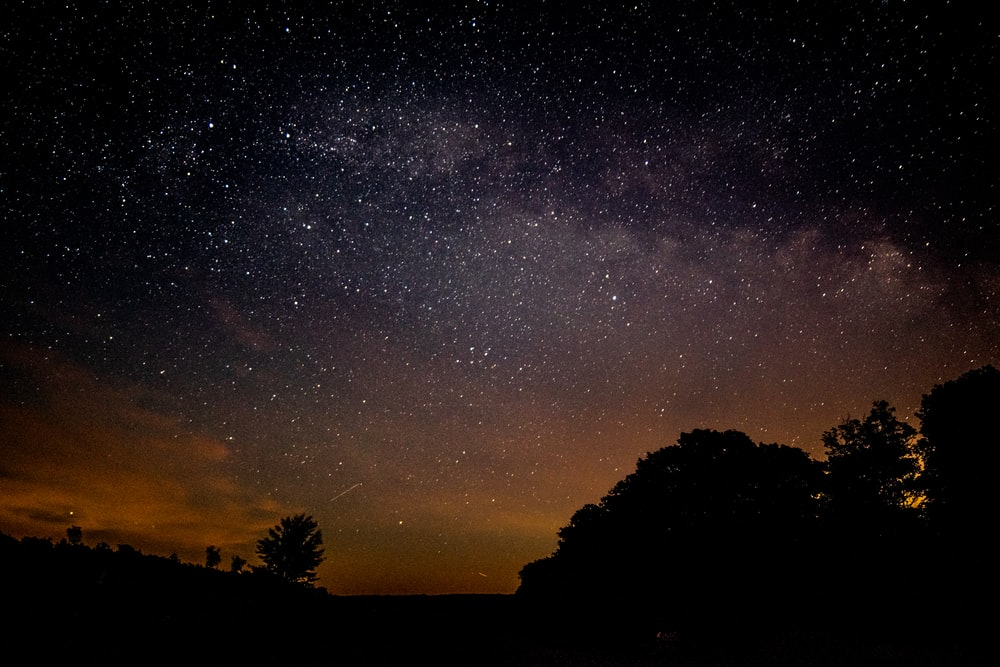 silhouette of trees under stars