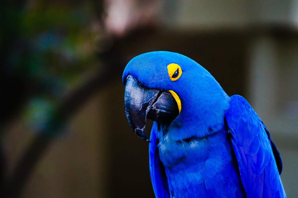 photo of blue and yellow macaw bird