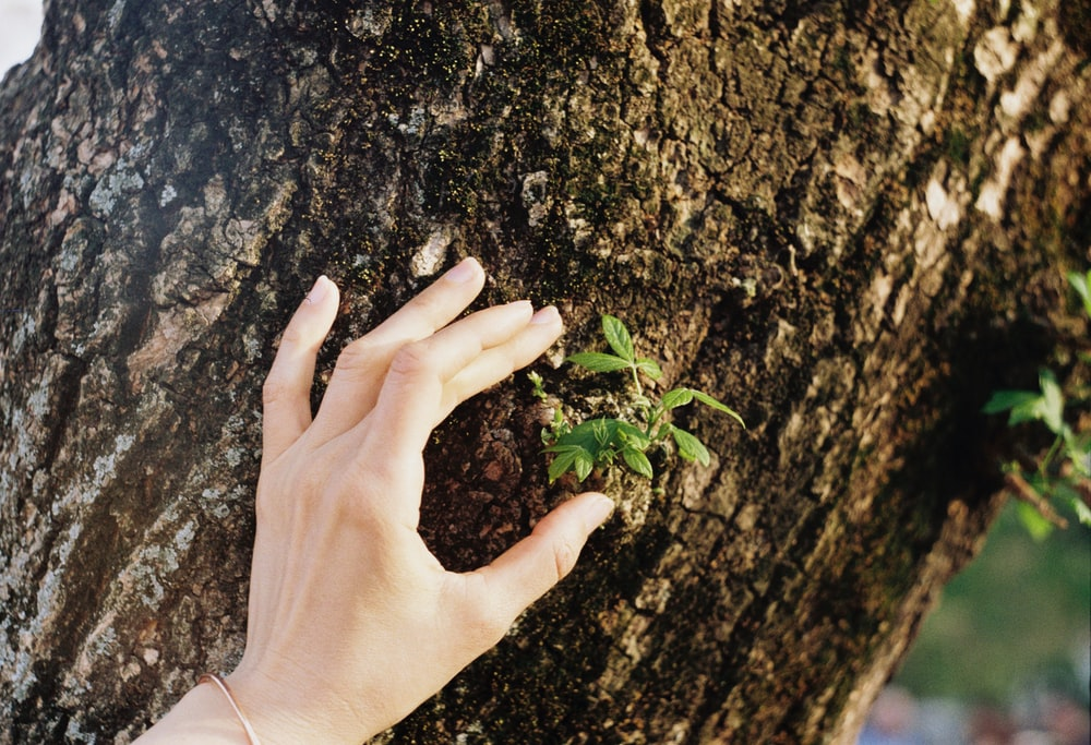 person touching brown tree trunk beside green leaf at daytime