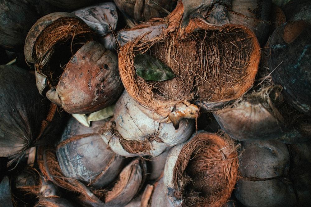 bunch of coconut husks