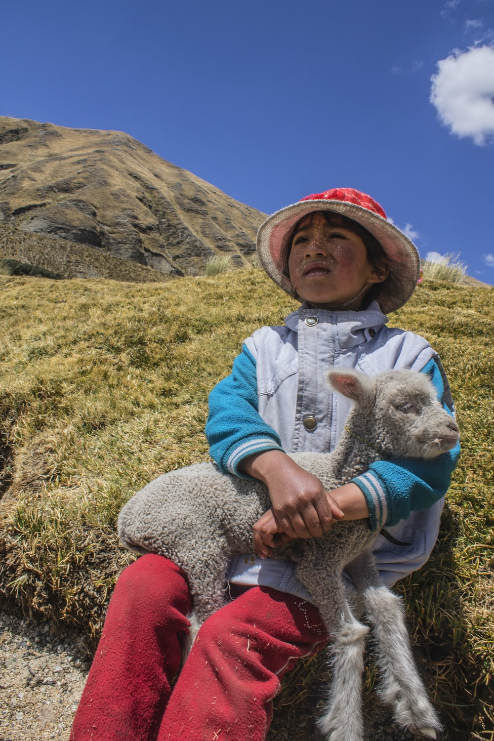 white sheep on boy's lap sitting on hill