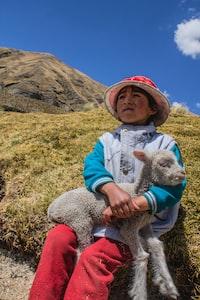 white sheep on boy's lap sitting on hill