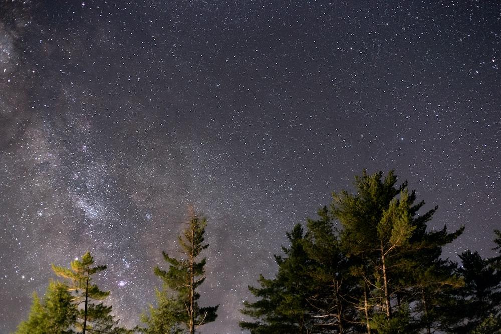 pine trees under starry night