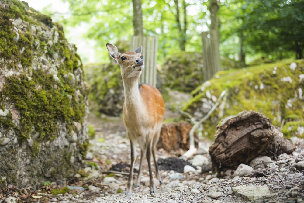 brown 4-legged animal near rock