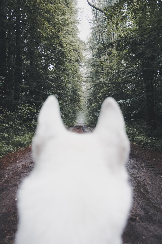 adult white dog beside trees