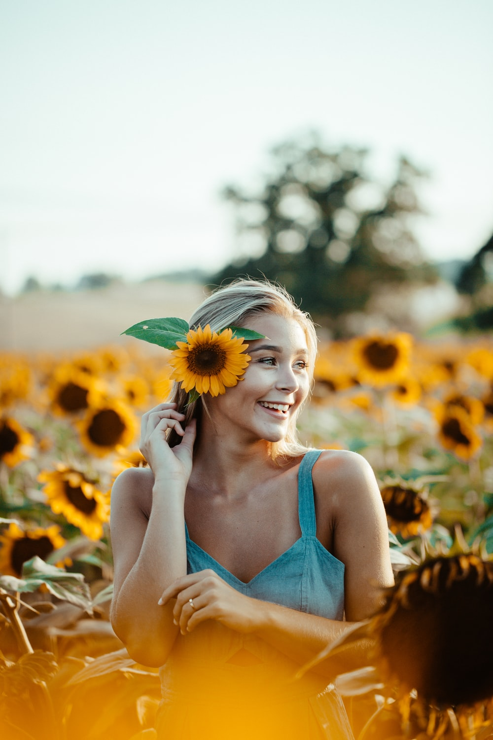 woman in blue sleeveless dress holding sunflower placing in ear
