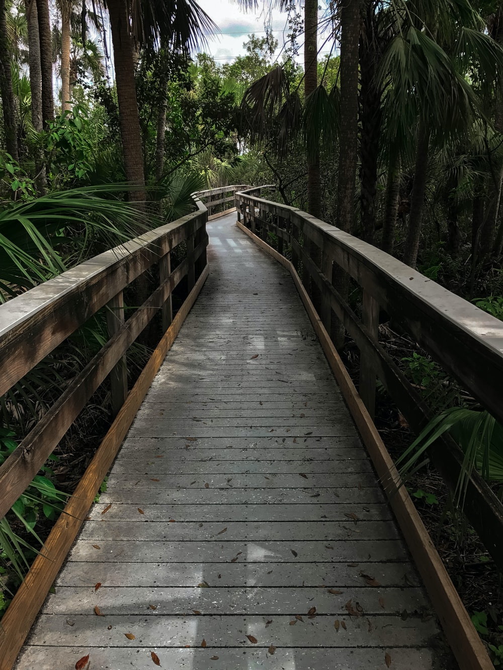 grey wooden pathway surrounded by trees