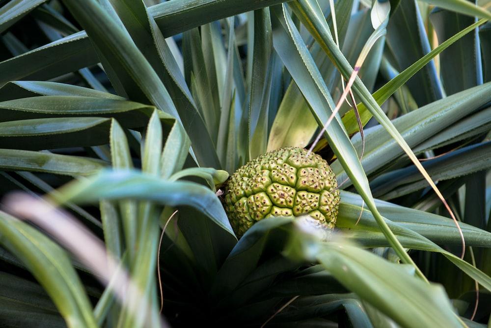 green fruit during daytime