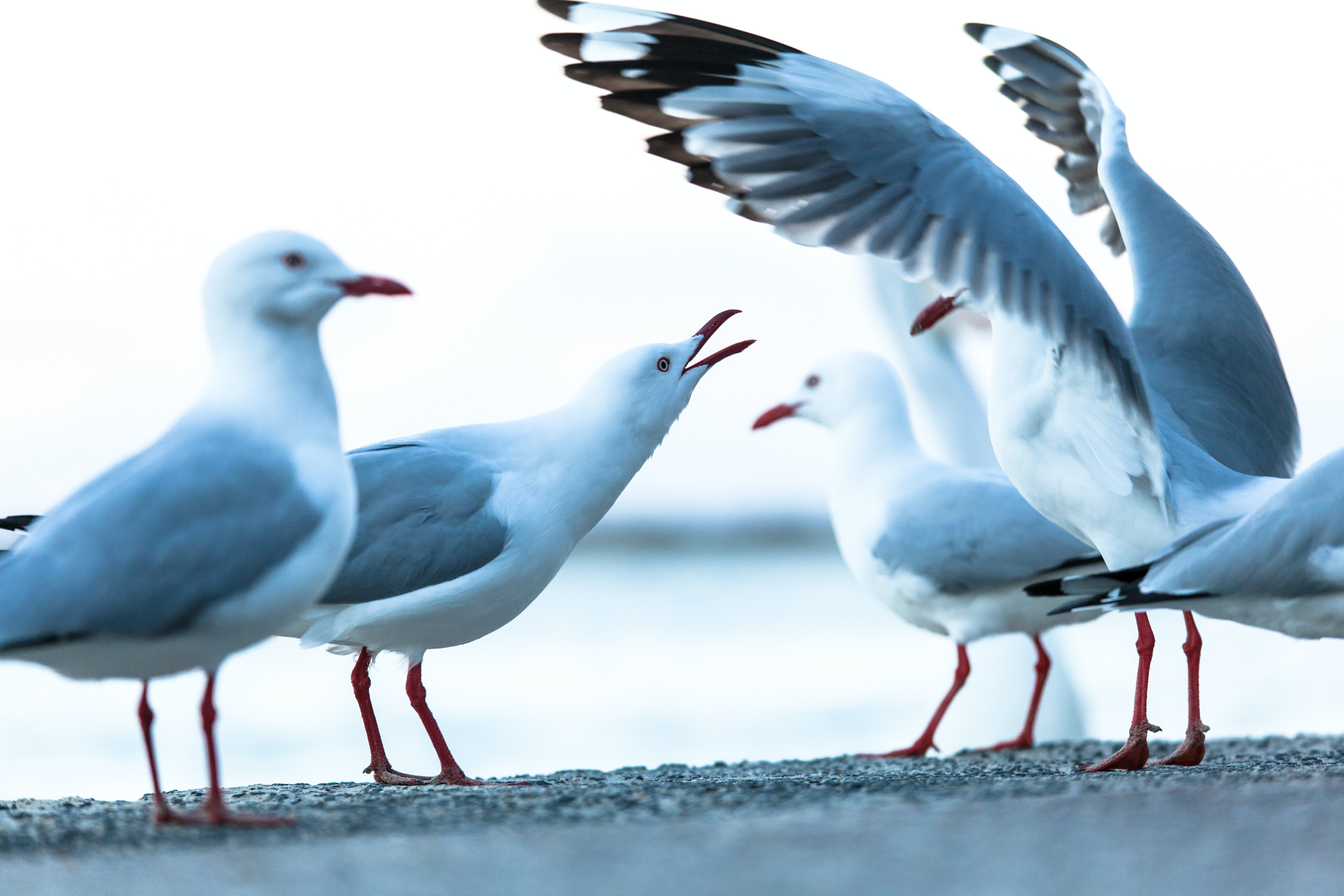 flock of white-and-gray seagull on gray concrete floor