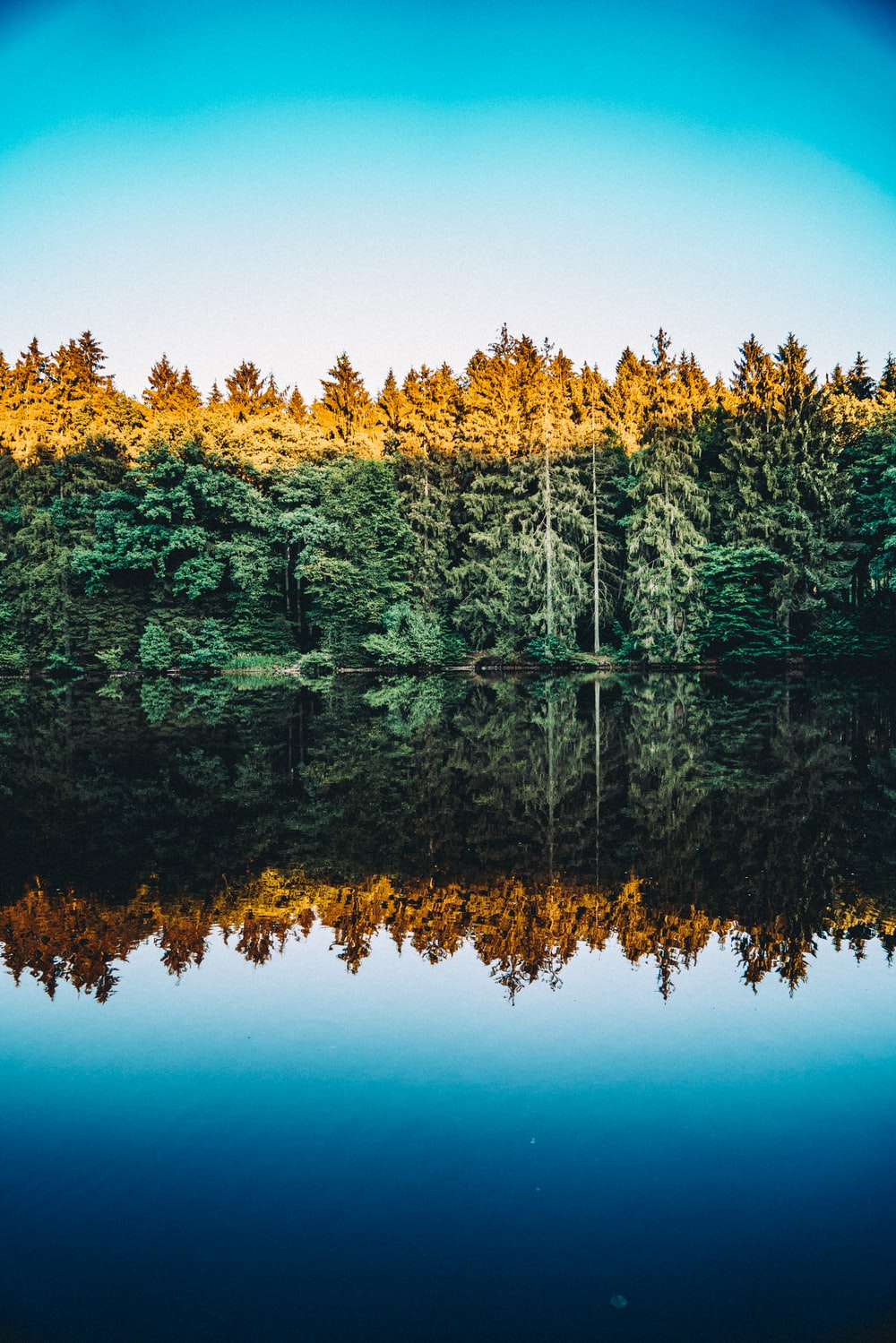 photography of trees reflecting on body of water under clear blue sky