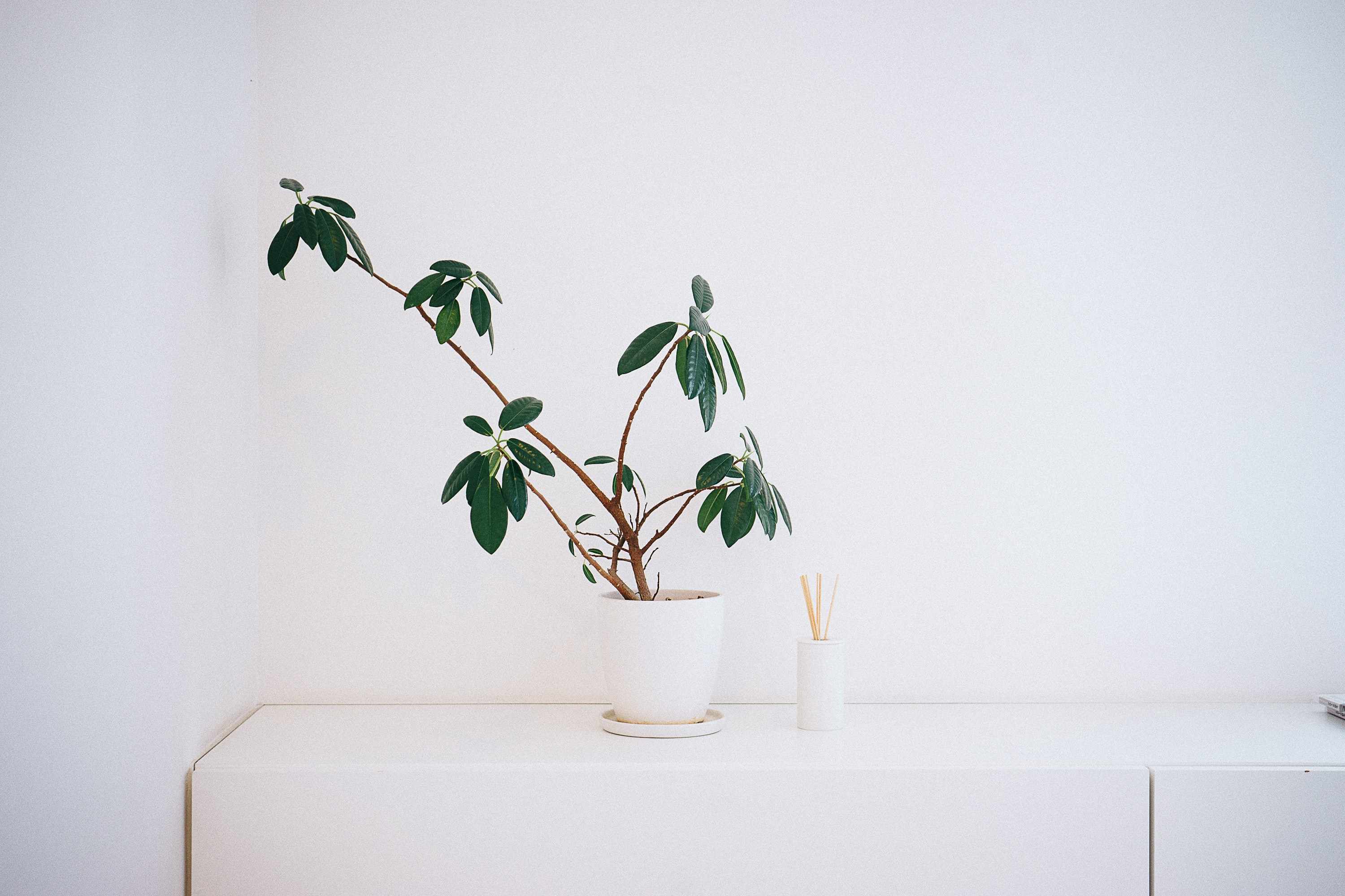 potted green leaf plant on white wooden table