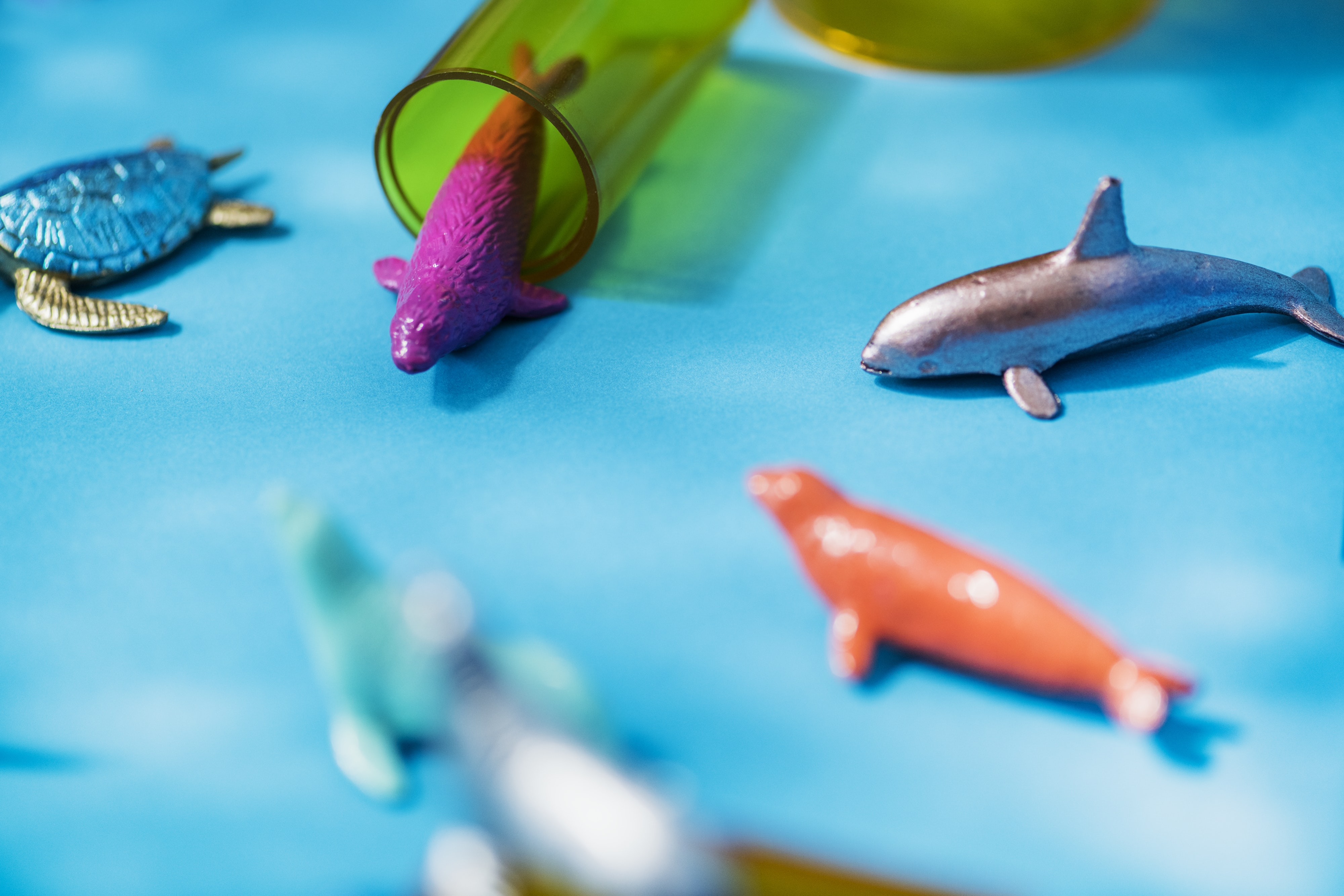 selective focus photo of assorted-color fish ornaments