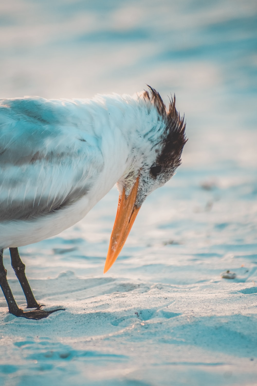 white and blue bird on sand