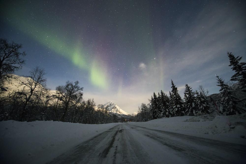 aurora lights on forest