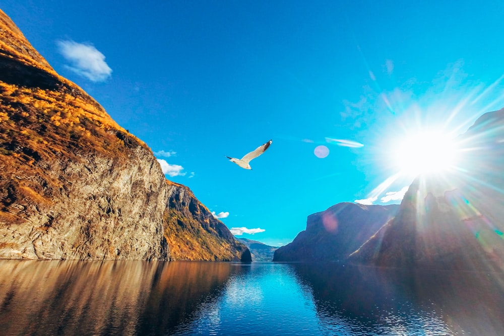 white bird flying near rock formations during daytime