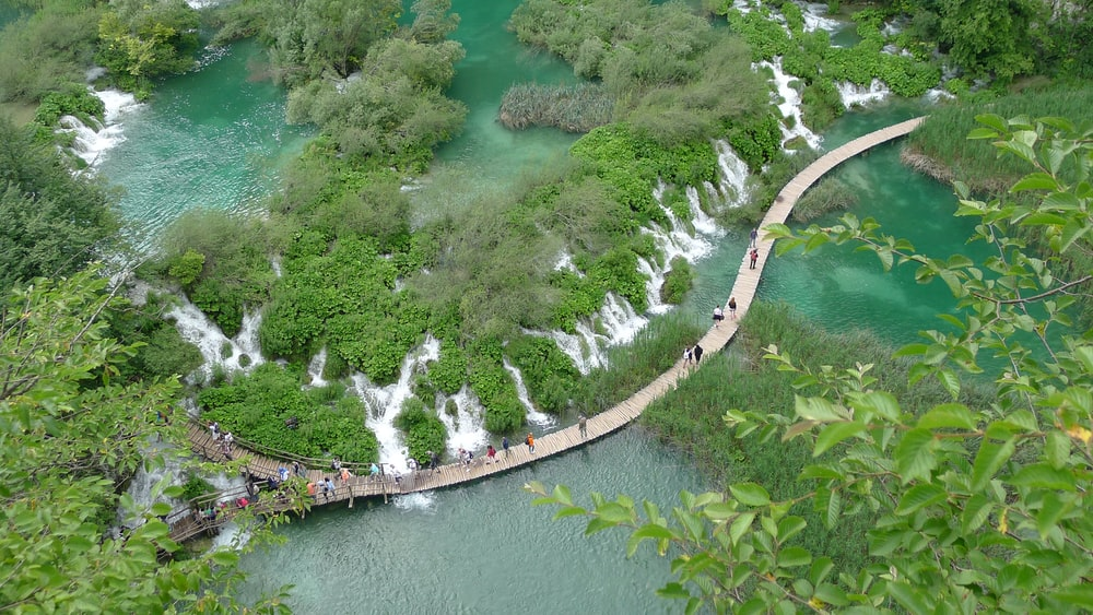 top view photo of green trees near waterfalls