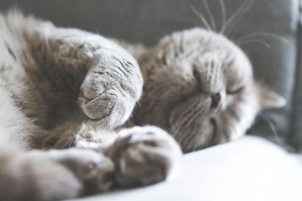 brown cat sleeping on white textile