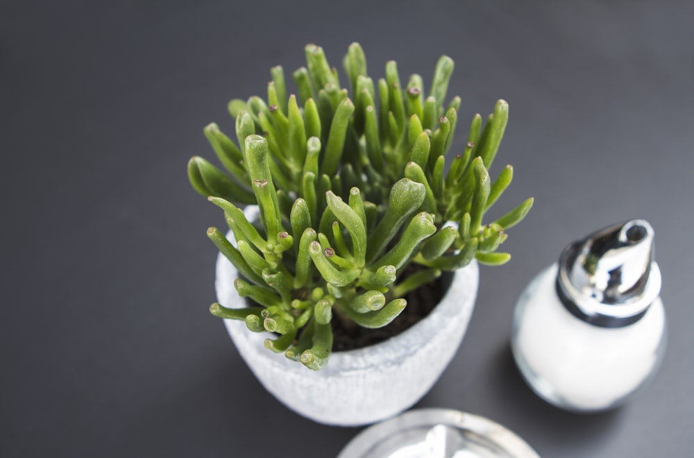 closeup photography of green plant