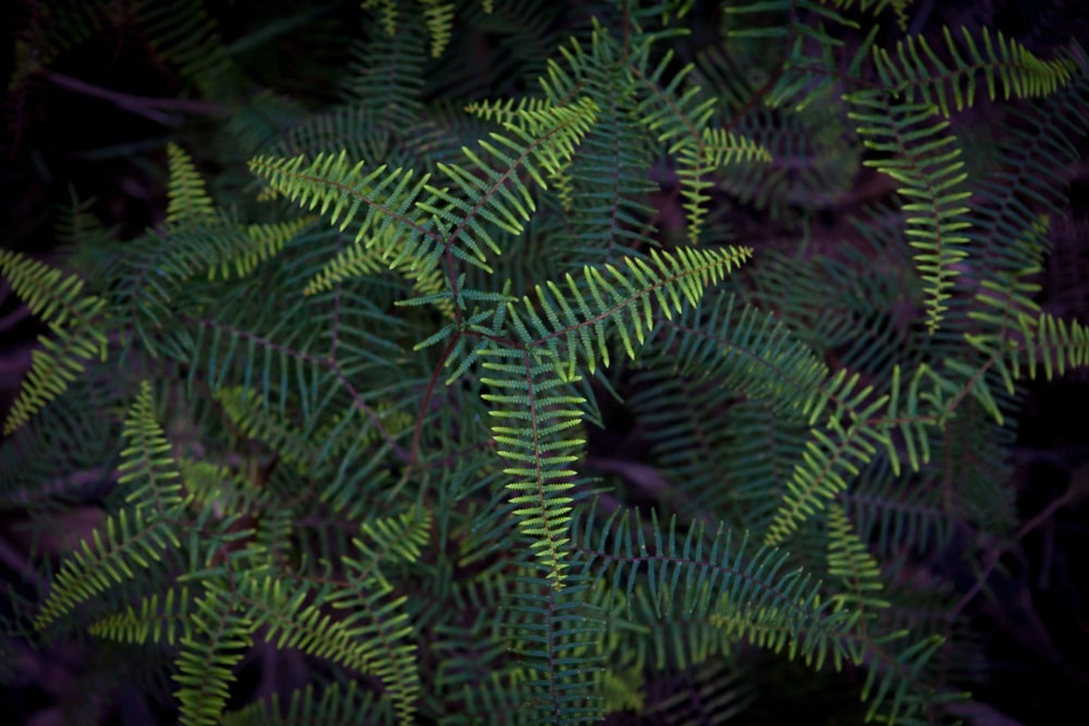 linear leafed plant